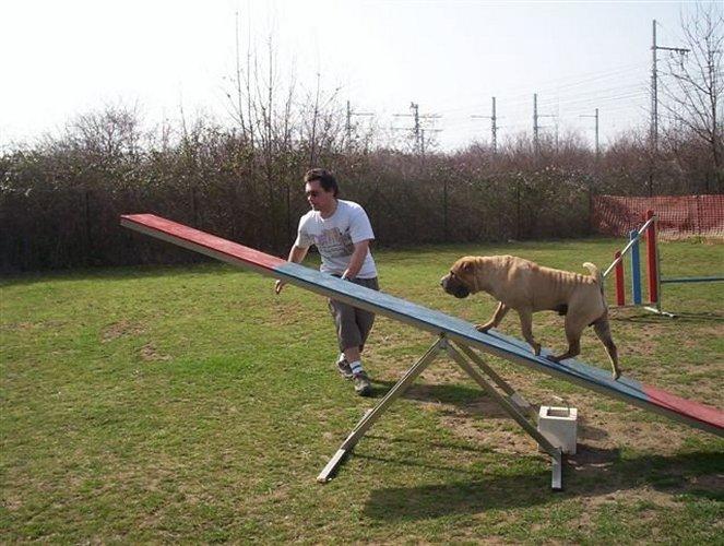 Balancoire agility