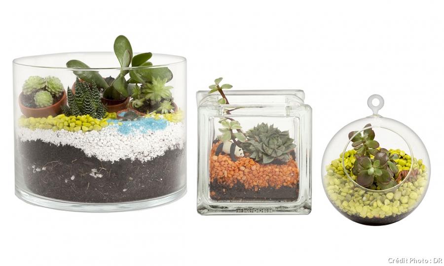 Mini jardin verre